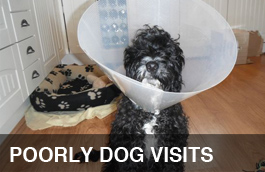 poorly-dog-visits-pet-services